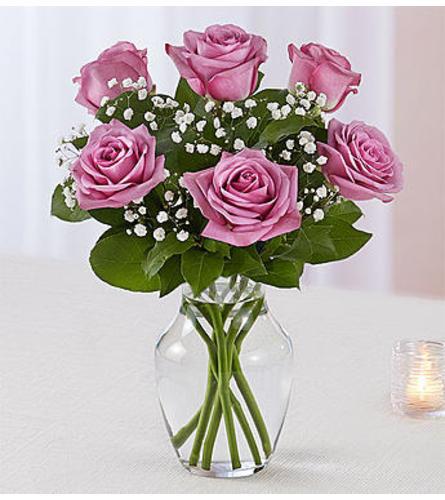 Lavender Roses Six