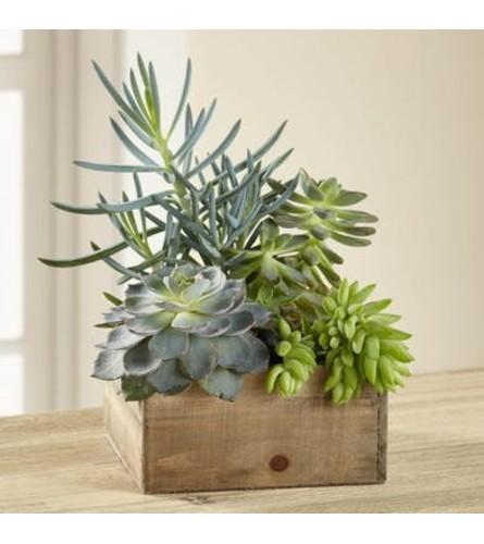 Southwestern Sophistication Succulent Garden Box