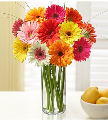Glorious Gerberas (12)