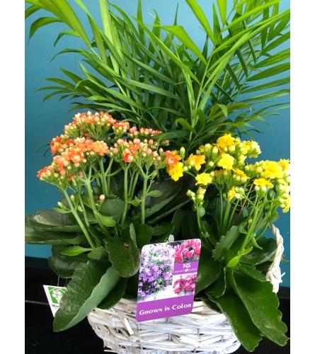 Blooming Planter Basket