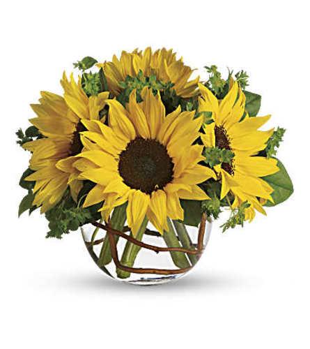 TF Sunny Sunflowers