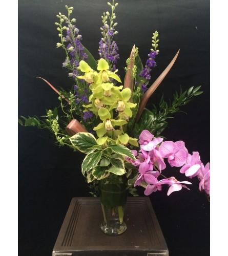 Phaleonopsis & Cymbidium