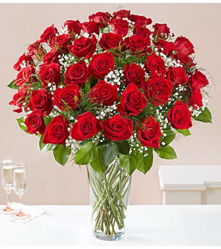 Red Roses Four Dozen