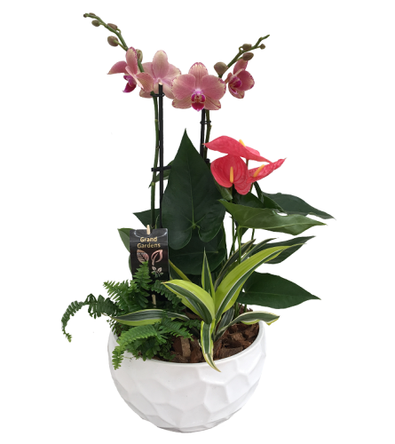 The Orchid Planter