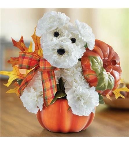 Adogable for Fall