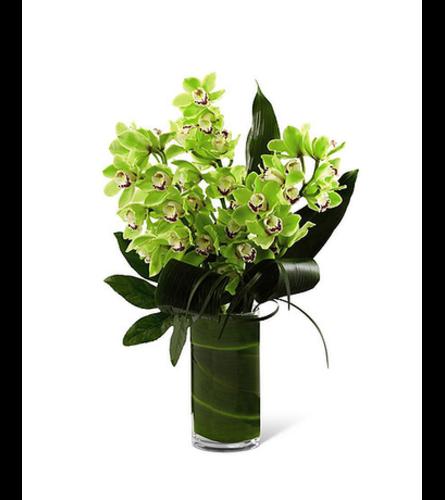Orchid Bloom Stunning Arrangement