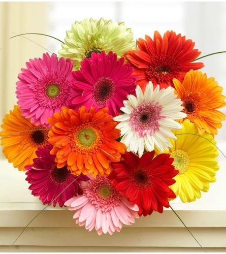 SALE!!! 12 Wrapped Mini Gerbera Daisies