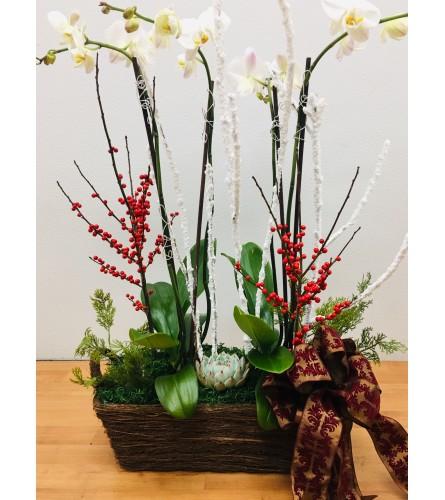 Christmas Orchid Garden