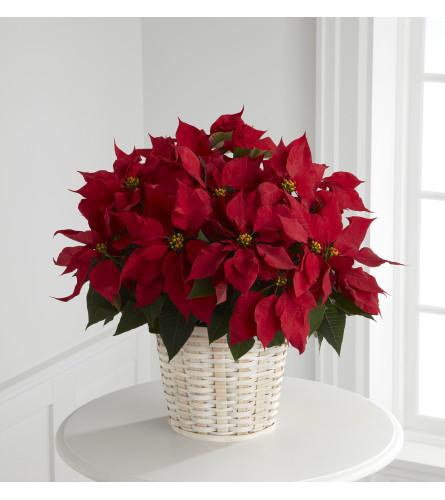 Red Poinsettia w/ Basket