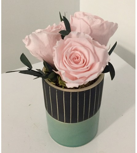 Preserved Rose Arrangement Pink