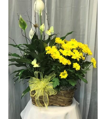 Ellington's Double Basket - Plants/Colors Vary