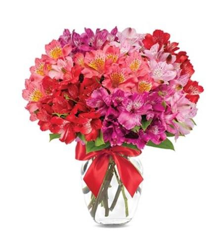 Peruvian Lilly Romance