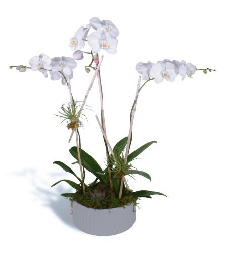 Orchids Trio 2020