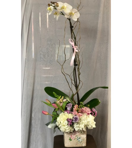 Lovely Orchid Arrangment