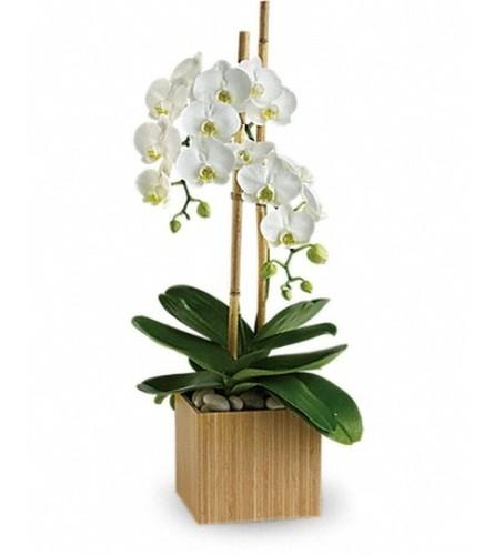 Elegant Opulent Orchids