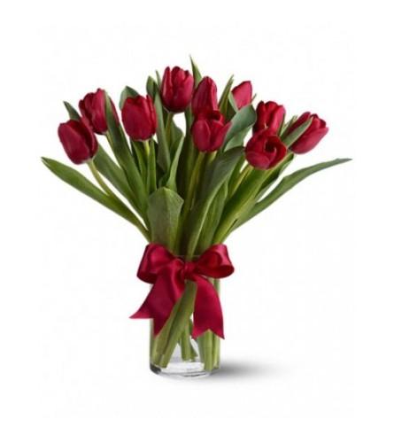 Elegant Radiantly Red Tulips