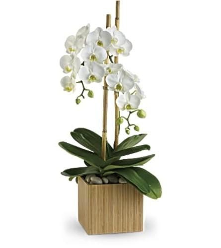 An Opulent Orchids