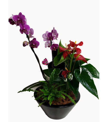 Beautiful Orchid Anthurium Tropical Planter