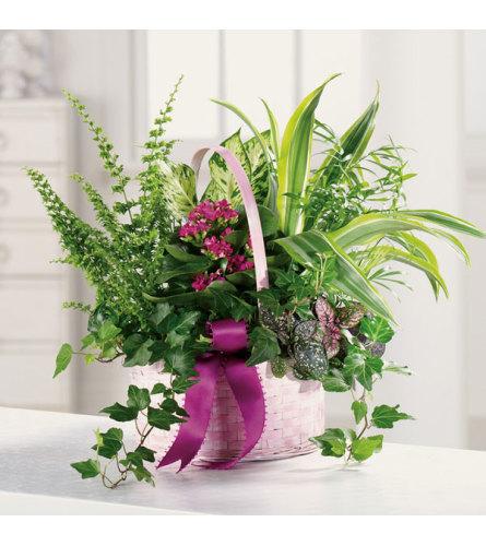 Flowering Memory Dish Garden