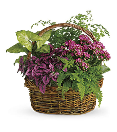 Secret Garden Basket of Plants