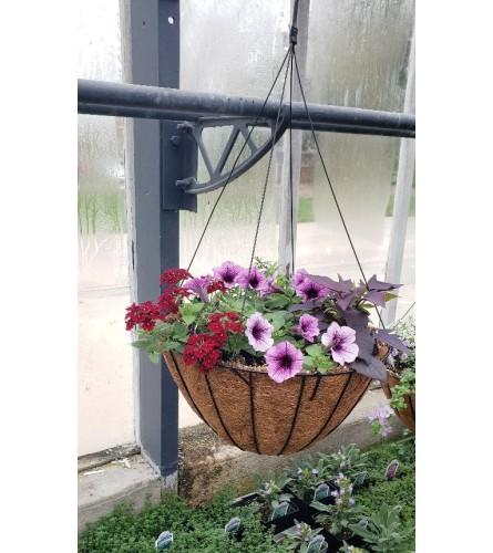 Hanging Basket for Sun