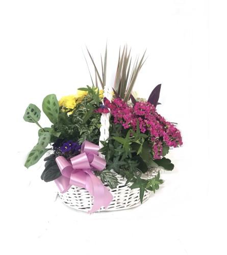 Large Dish Garden Basket