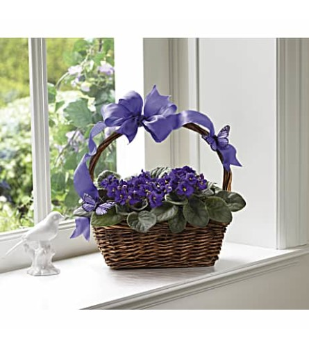 Violets and Butterflies (Colors Vary)