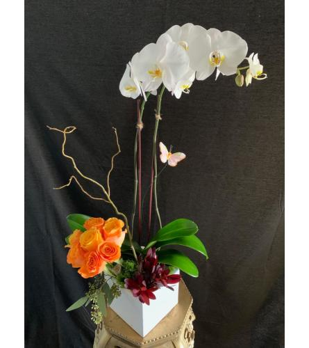 Orchid Paradise & Roses