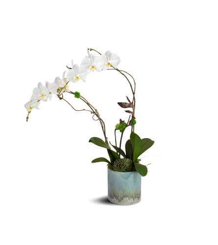 Swan Lake Orchids