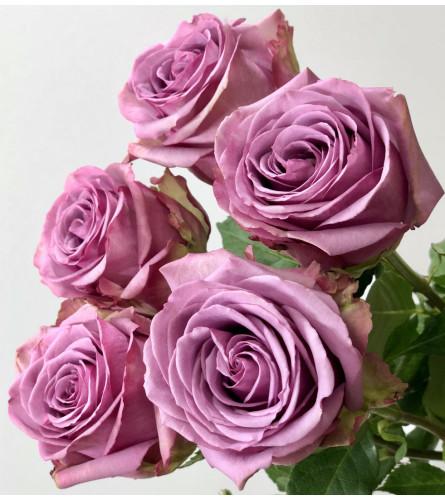 18 Long Stem Premium Lavender Roses