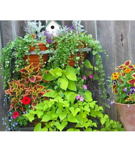 Blooming outdoor pots