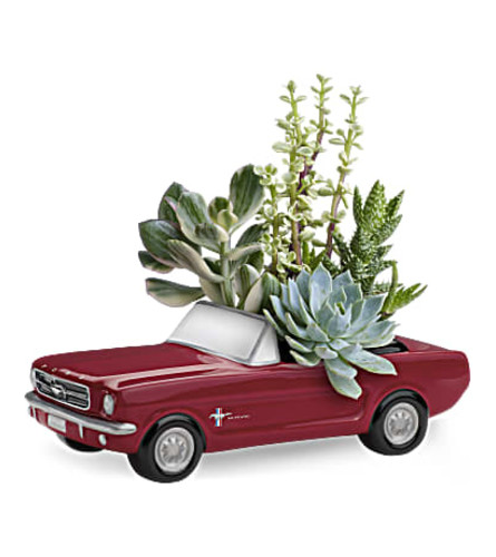 Mustang  Full of Succulents