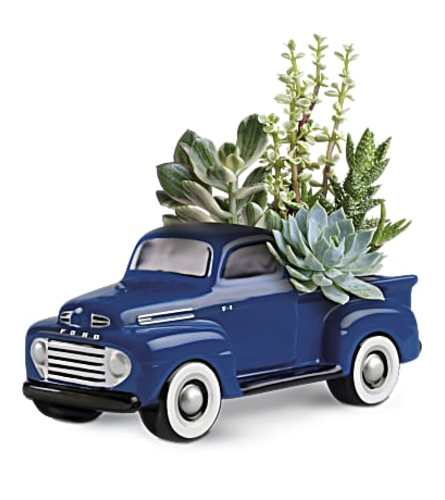 Ford Pick up Full of Succulents