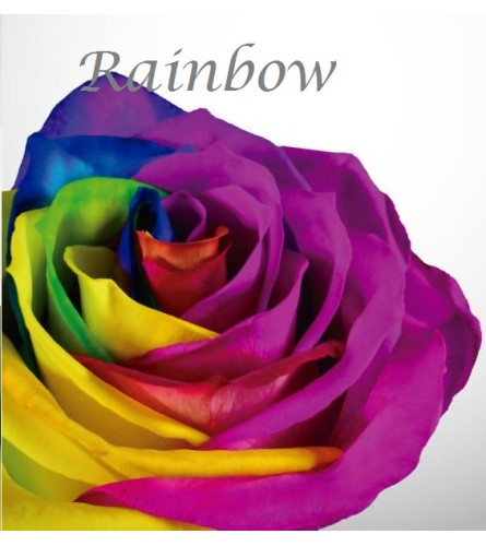 Specialty Roses - One Dozen Rainbow Roses Arrangement