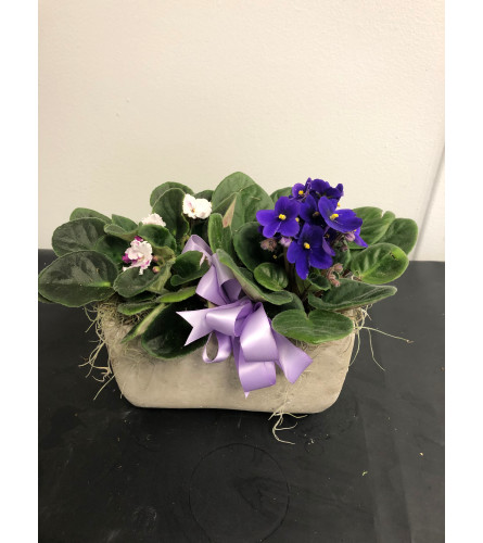 African Violet Planter