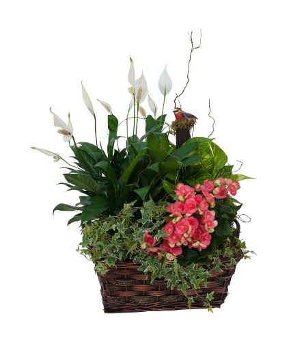 Living Blooming  Garden Basket by Country Gardens