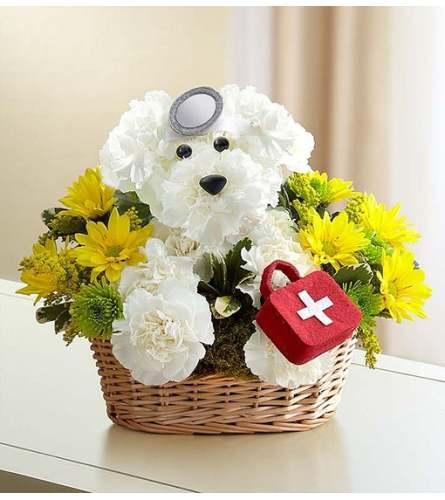 Dr Pup