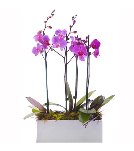 Purple Orchids Arrangement