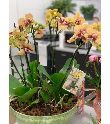 ORCHID LOVERS