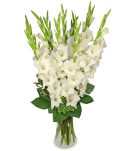 Precious White Glads