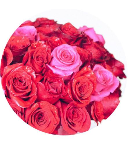 Bergerons Classic Roses
