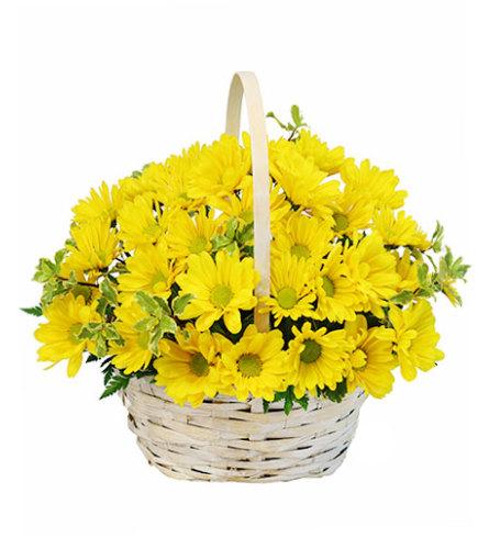 Delightful Smiles Basket of Daisies - FSN
