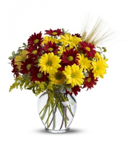 SALE!! Fall for Daisies