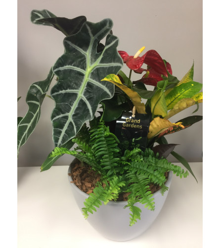 Modest Anthurium Planter