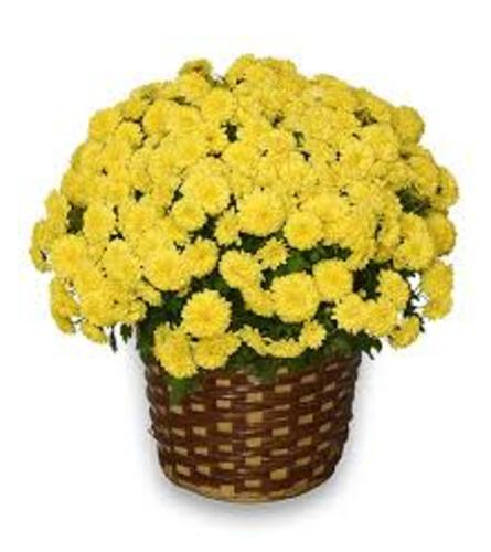 Mum Sunshine Basket