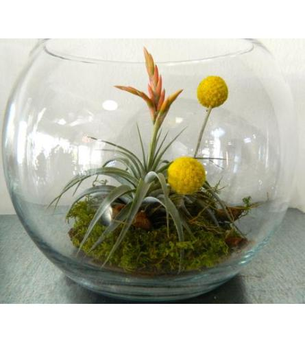 Tillandsia in Bowl