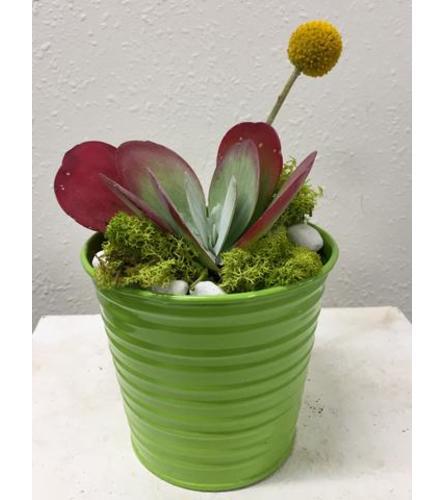 Succulent in Tin