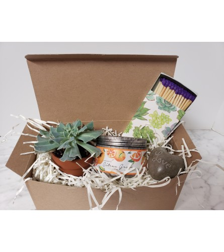 Succulent & Candle Gift Box