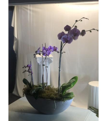 Garden of Elegance Orchid Arrangement