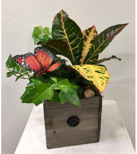 Foliage Box
